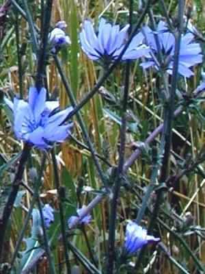 Homöopathie und Bachblüten Ratgeber Doc-Nature