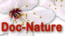 HOME DOC NATURE - Bachbl�ten Lexikon  Medizinlexikon