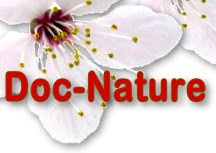HOME DOC NATURE - Bachblüten Lexikon  Medizinlexikon