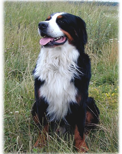 Bachblüten für Hunde Ratgeber Doc-Nature